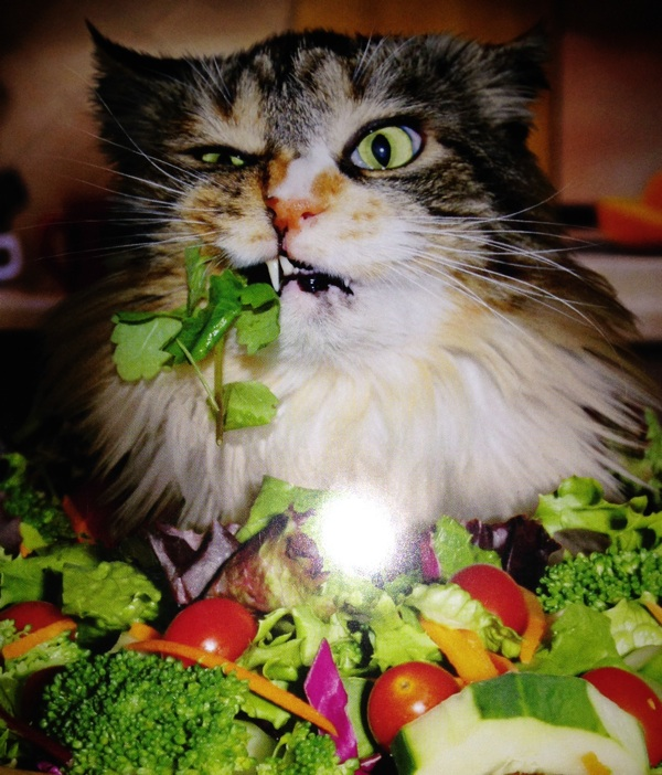 Can Cats Eat Mean And Vegetables