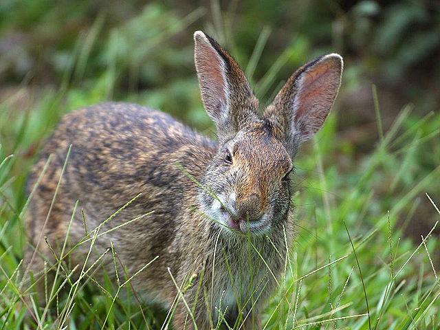 Unimpressed bunny 5