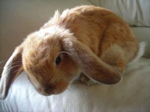 Unimpressed bunny 9